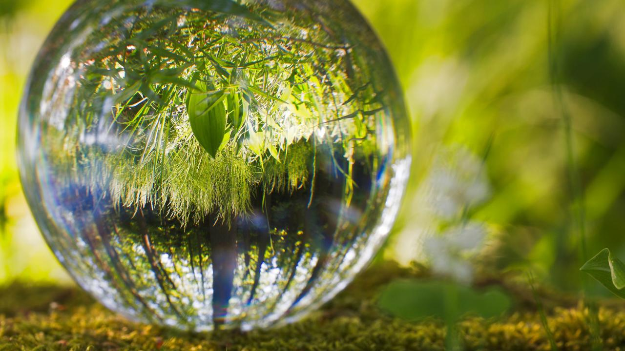 Nature showing in a glass ball